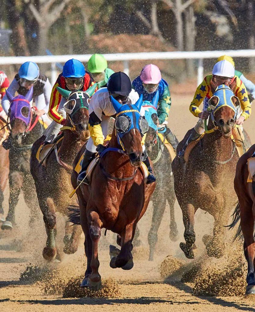 Multiple horse race